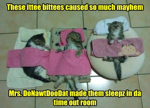 time out nap itty bitty kitty committee funny - 7699663104