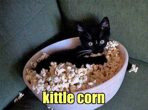 kitten,cute,kettle corn