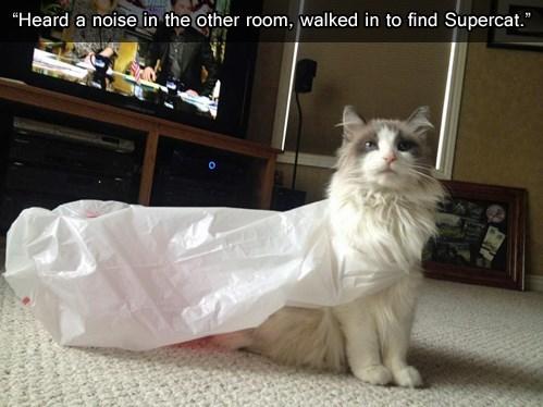 cape supercat funny - 7701551104