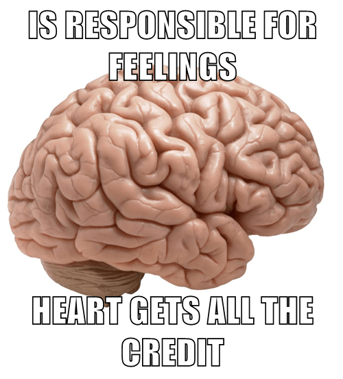 feelings,organs,brain