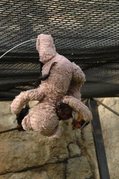 teddy bear bats hug - 7701659392