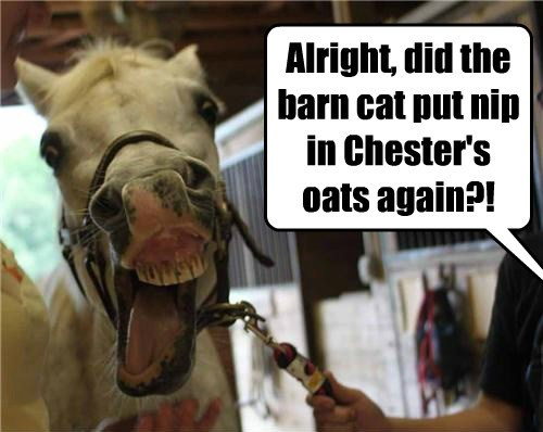 Alright, did the barn cat put nip in Chester's oats again?!