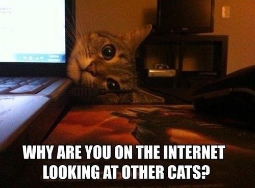 internet computer Cats funny - 7701800704