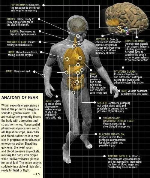anatomy afraid science funny