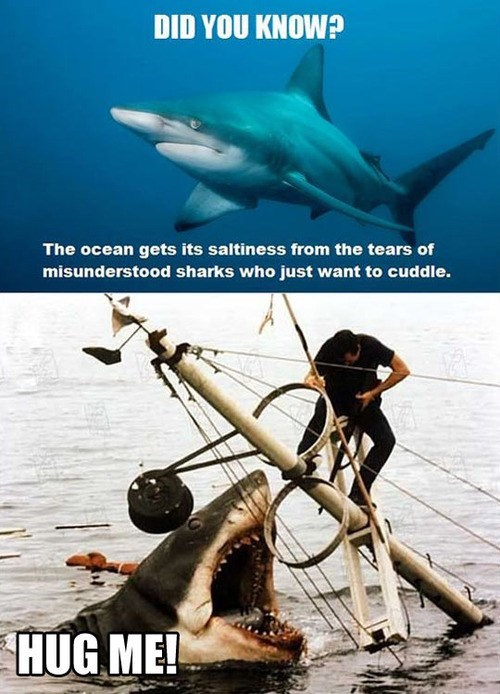 did you know sharks animals - 7702070784