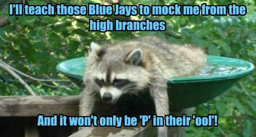bathroom humor birds raccoon funny - 7702185216