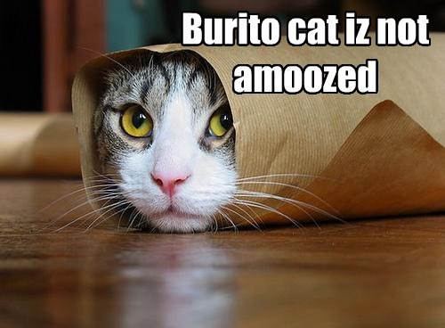 not amused.,burrito,funny
