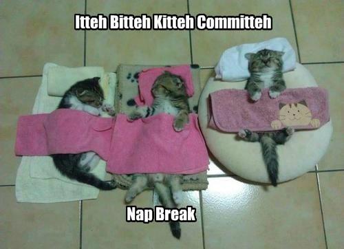 itteh bitteh kitteh committeh,nap,cute,mayhem