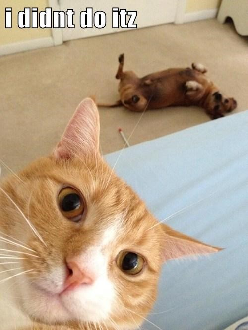photobomb dogs Cats funny guilty - 7703161344