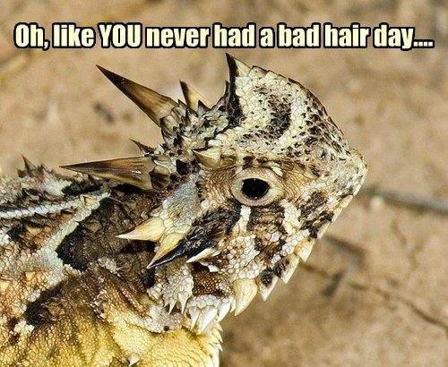Staring lizard bad hair day funny - 7703638528