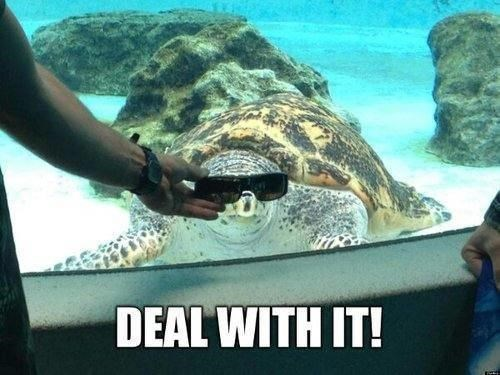 Deal With It,aquarium,turtle,funny