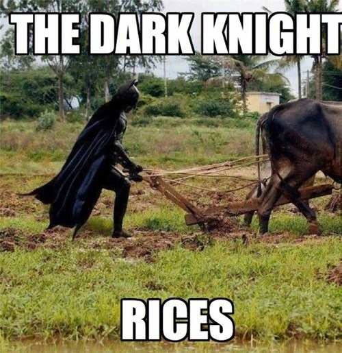 puns,batman,rice