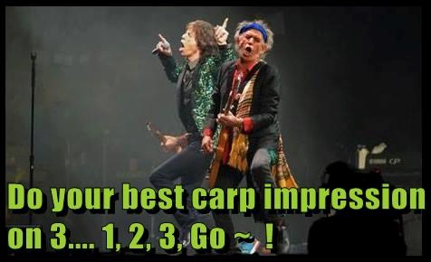 rocking out impression carp - 7704116480