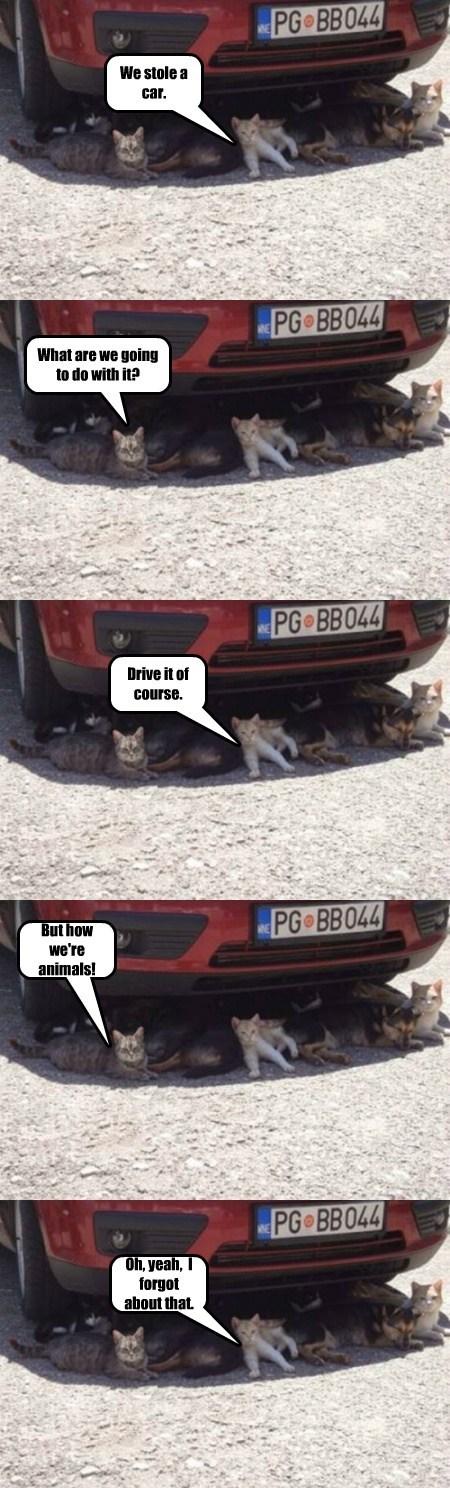 cars Cats funny - 7704180224