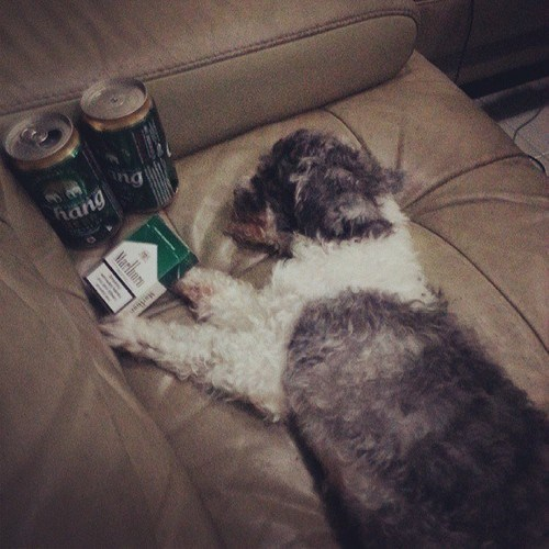 beer dogs crunk critters funny animals - 7704286976