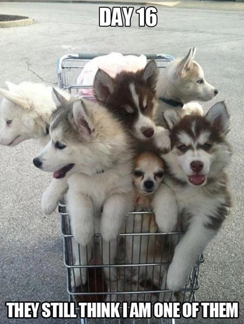 dogs funny hidden - 7704323584