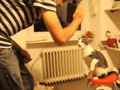 Cool High Five-ing Cat