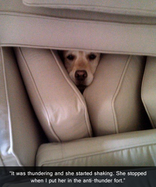 Dog Fort,thunder,couch,funny