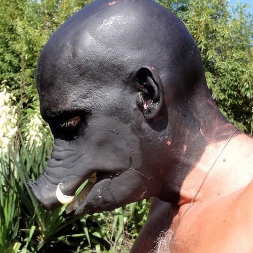 wtf masks pig funny - 7704633856