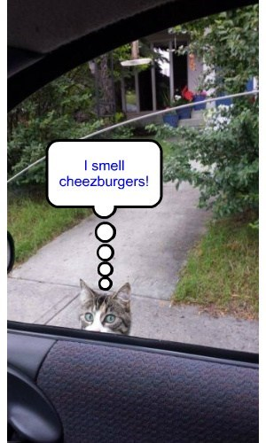 Cheezburger Image 7705057536