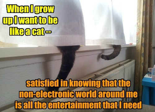 entertainment Cats funny - 7705236224