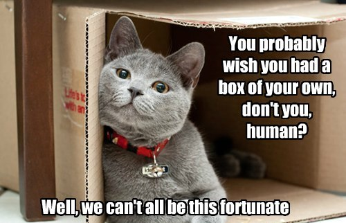 You probably wish you had a box of your own, don't you, human? Well, we can't all be this fortunate