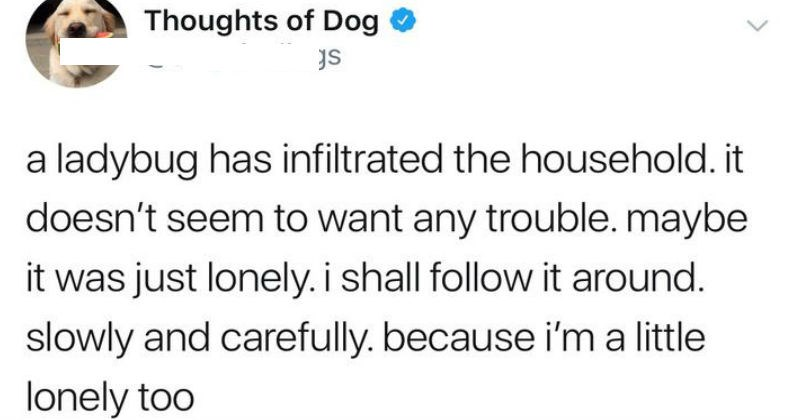 dogs thoughts twitter
