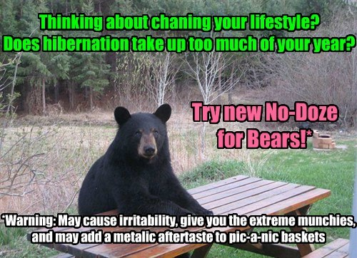 drugs bears hibernation funny