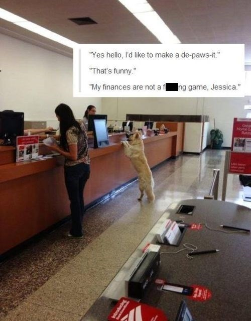banks dogs puns funny - 7706933760
