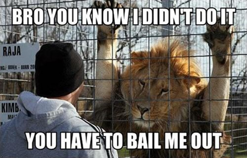 bail jail lion funny - 7706949888