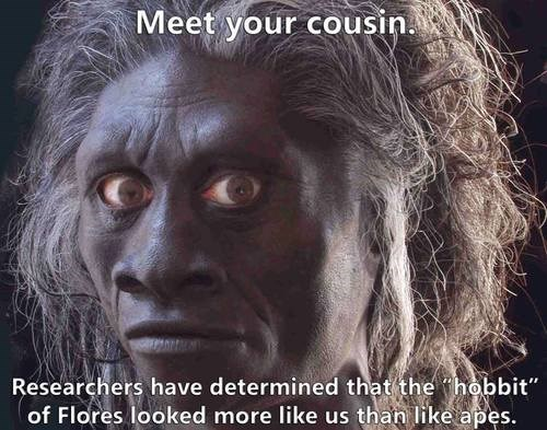 hobbit of flores apes science funny cousin - 7707027712