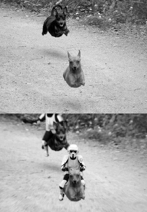 star wars,photoshop,funny,wieners