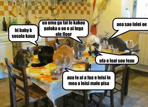 Cheezburger Image 7707285760