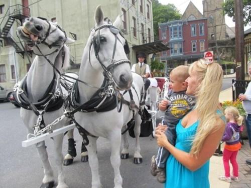 photobomb horses funny - 7707353600