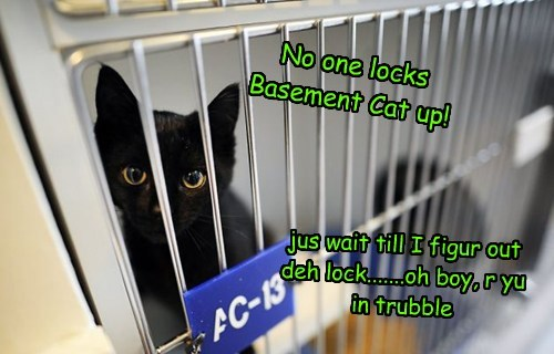 basement cat jail funny - 7707387136