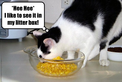 *Hee Hee* I like to see it in my litter box!
