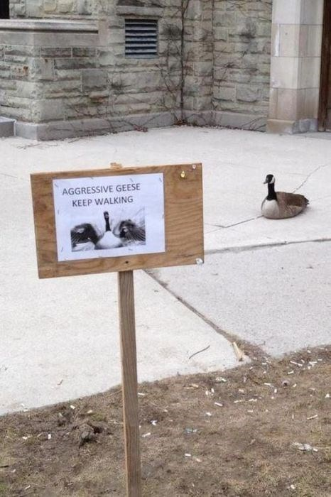 sign goose dangerous funny fail nation g rated - 7707549952