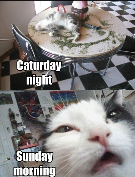 gifs catnip Party Cats funny - 7707798272