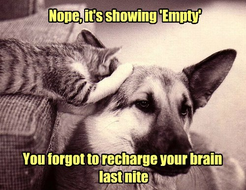 dogs empty brain dumb Cats funny - 7707983616