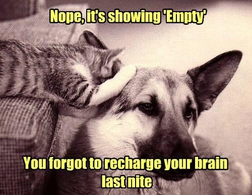 dogs empty brain dumb Cats funny - 7707983616