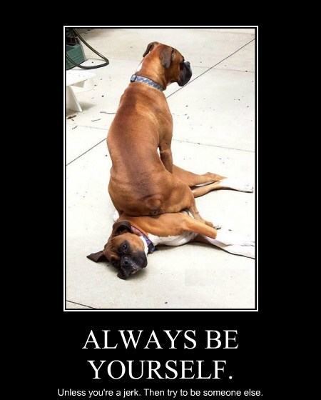 dogs jerks funny animals - 7707983872
