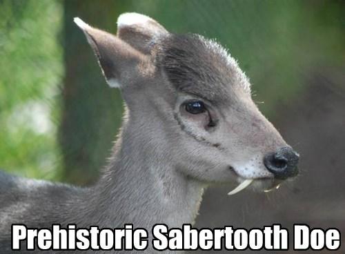 sabertooth deer fangs funny - 7709371392