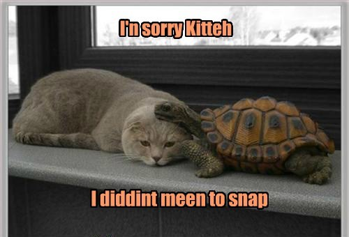 turtles snap turtle Cats funny - 7709571328