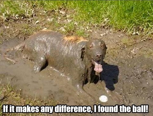 ball,mud,dirty,funny
