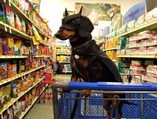 dogs,IRL,cute,batman,funny,store