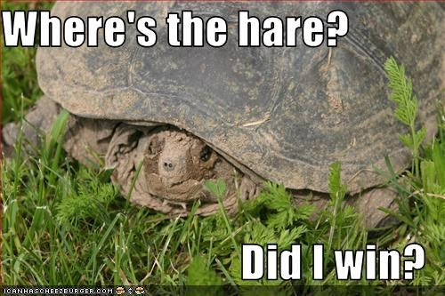 Where's the hare?  Did I win?