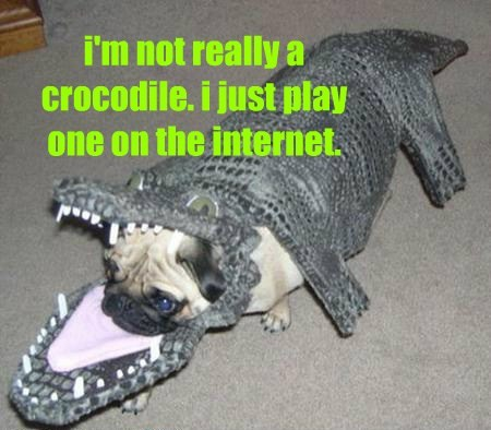 crocodile internet mind blown funny - 7710166528