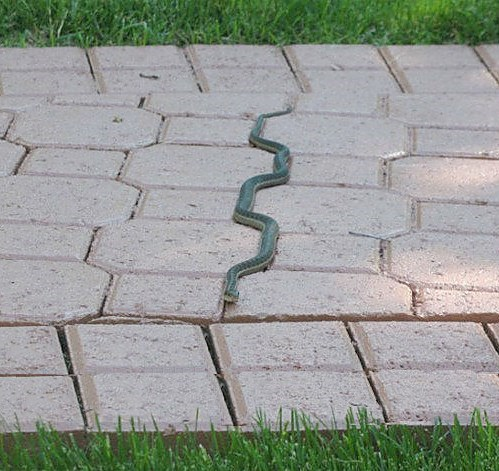 mother nature ftw,snakes,funny