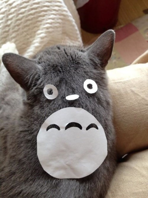 pets anime totoro nerdgasm Cats funny g rated win - 7710330112
