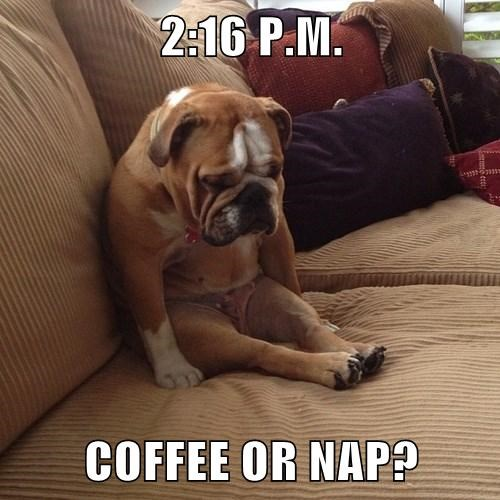 naps,tough call,coffee,funny